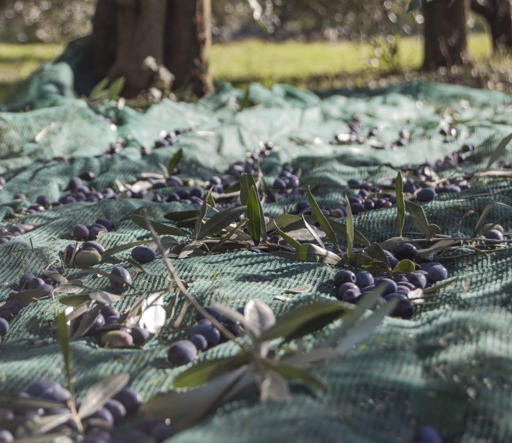 Adam Marelli Photography Workshops Puglia Olives