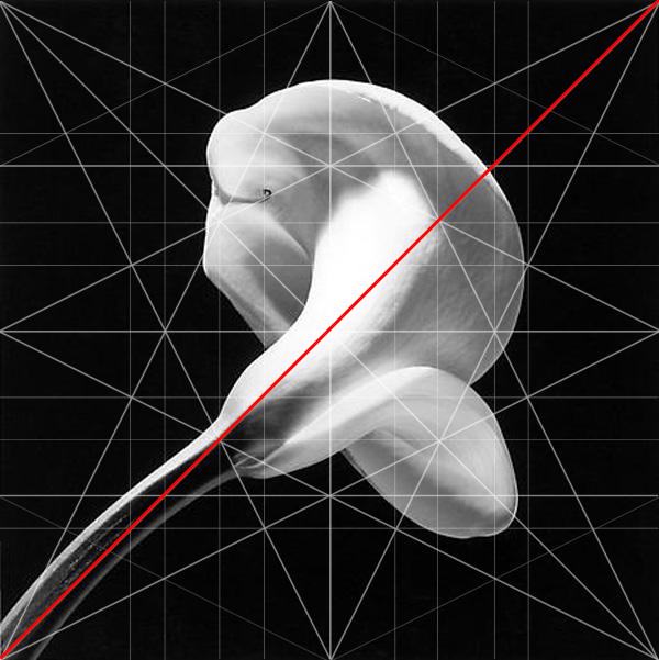 Calla Lilly Robert Mapplethorpe Composition Baroque Diagonal Adam Marelli Photography Workshops