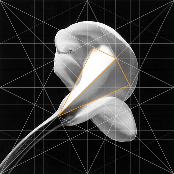 Calla Lilly Robert Mapplethorpe Composition Pyramid Adam Marelli Photography Workshops