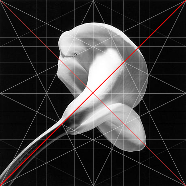 Calla Lilly Robert Mapplethorpe Composition Sinister Diagonal Adam Marelli Photography Workshops