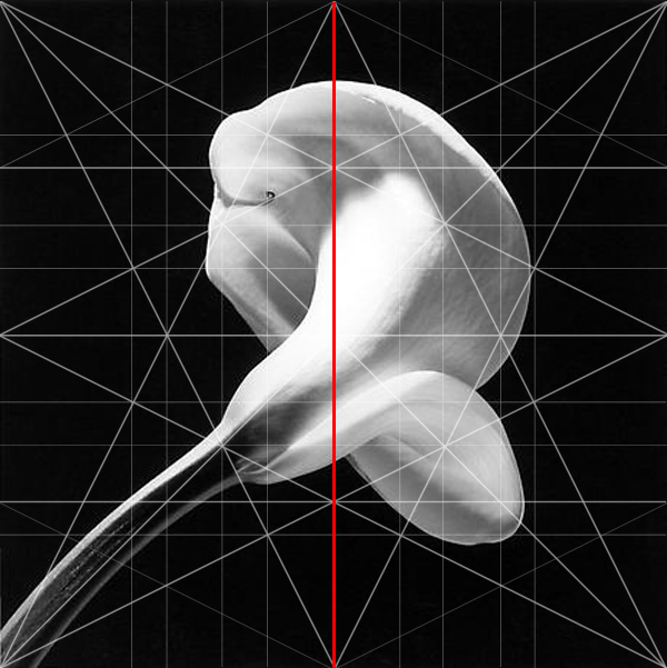 Calla Lilly Robert Mapplethorpe Composition Dominant Vertical Adam Marelli Photography Workshops