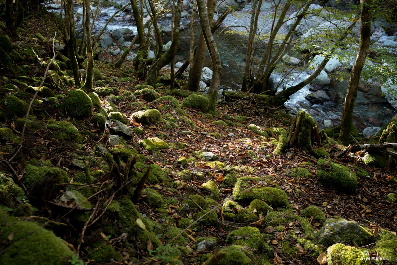Iya Valley Tokushima Adam Marelli-14
