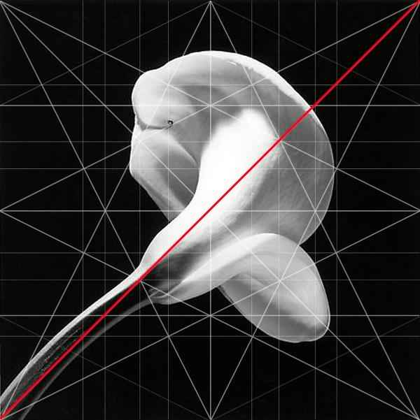 Calla Lilly Robert Mapplethorpe Composition Baroque Diagonal Adam Marelli Photography Workshops
